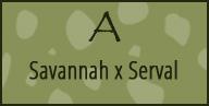 a savannah serval