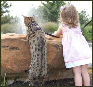perfect petzzz cat